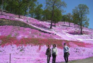 24東藻琴芝桜.JPG