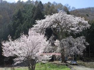 金比羅神社111.jpg